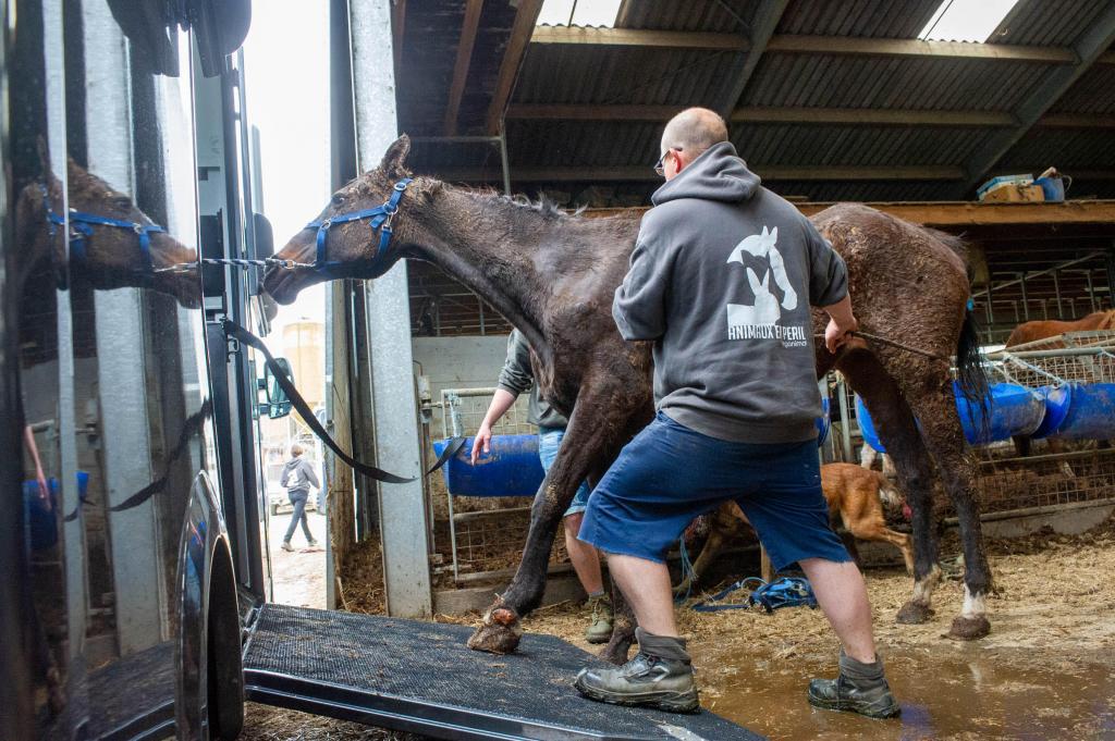 Les chevaux étaient extrêmement négligés. (Crédit : Animaux en Péril)