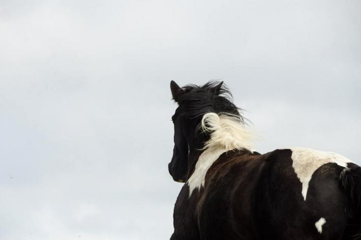 Vous avez envie de partir à l'aventure avec votre cheval? Voilà comment trouver plus facilement un hébergement. (Crédit : Gaëlle Colinet)