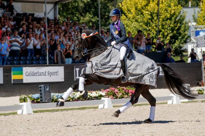 Glamourdale sous la selle de Charlotte Fry, sacré champion du monde des 7 ans (Crédit photo: Ermeloyh/Hippofoto)