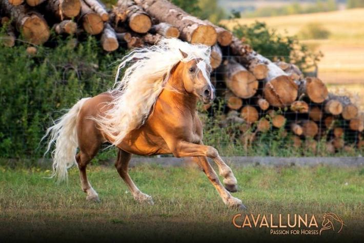 """Cavalluna """"World of Fantasy"""" s'arrêtera à Bruxelles ces 16 et 17 mars 2019"""