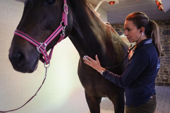 Emmanuelle van Erck réalise un check up des chevaux de haut niveau environ tous les trois mois (Photo :  Westergren Photography)