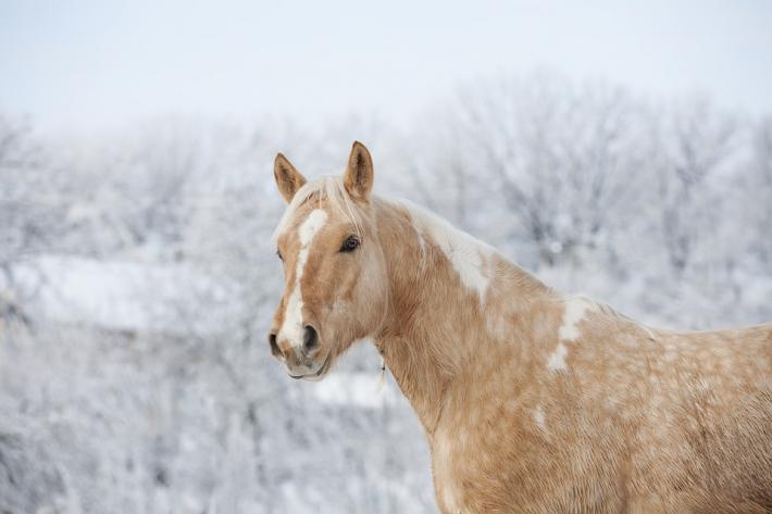 La biomécanique du cavalier joue un rôle essentiel dans celle de sa monture. (Crédit : CC0 Creative Commons)