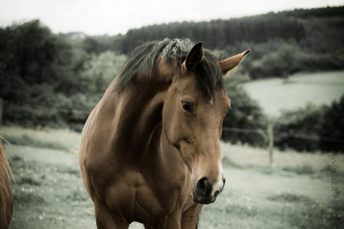 Seulement 62.000 chevaux britanniques sont revenus du front. (Crédit : CC0 Creative Commons)