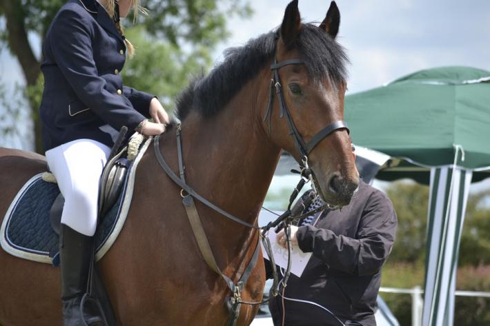 Le prix des chevaux de compétition est difficile à estimer. (Crédit : CC0 Public Domain)