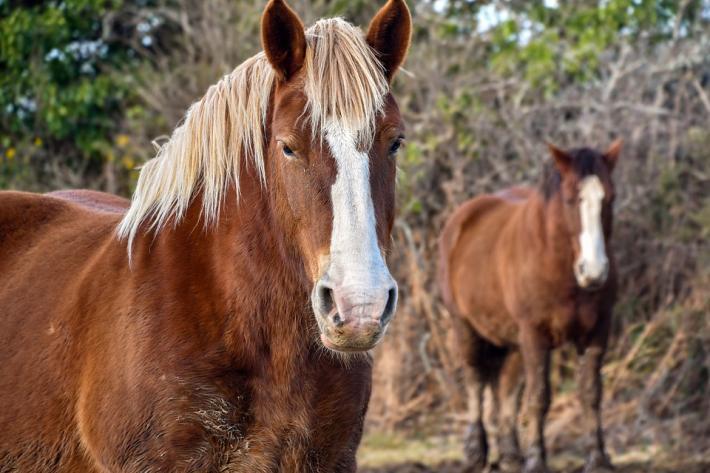 Les chevaux de la ferme d'Hougoumont ont évité le pire. (Crédit : Pixabay License)