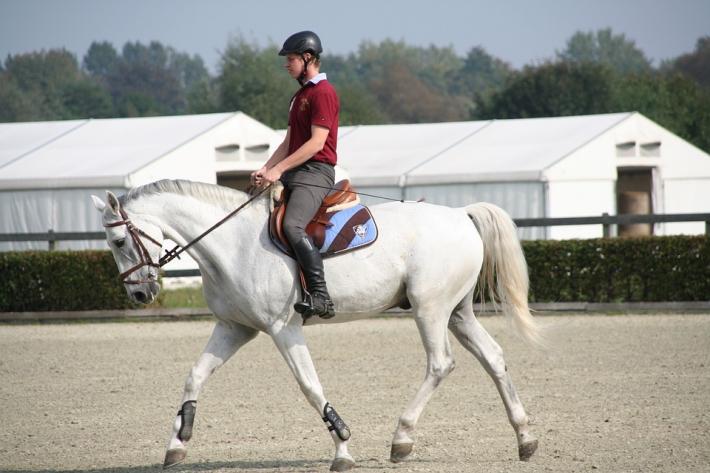 Le cheval devrait toujours avoir des aliments présents dans son estomac. (Crédit : Pixabay License)