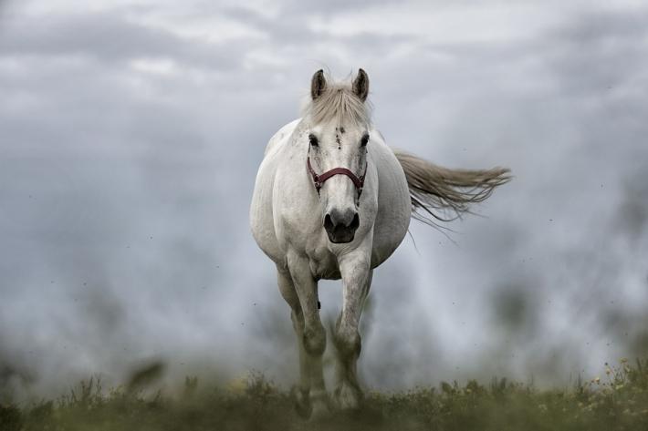 L'objectif est entre autres d'améliorer le bien-être des chevaux. (Crédit : CC0 Creative Commons)