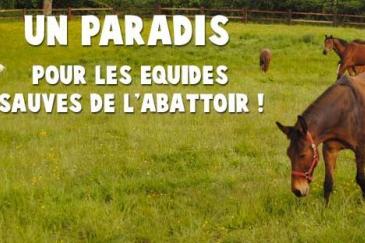 Crédit photo : 100 chevaux sur l'herbe