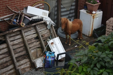 "Un riverain a pris en photo un poney ""stocké"" parmi les débris (Crédit : Guy Belang sur Facebook)"
