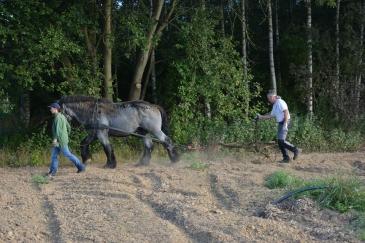 La force d'Igor est mise à contribution pour préparer le terrain du potager (Crédit : La Ferme de Froidmont Insertion sur Facebook)