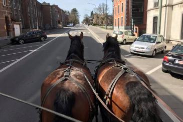 """Les chevaux seront mis à l'honneur dans le """"Jardin extraordinaire"""". (Crédit : Page Facebook Les Traits de la Famenne)"""