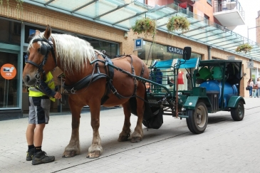 Un cheval dans la ville, à Louvain-la-Neuve (Crédit photo : L'équimag)