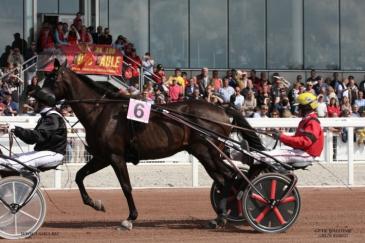 Bold Eagle sera présent ce dimanche 4 août sur l'Hippodrome de Wallonie (www.lamia.biz)