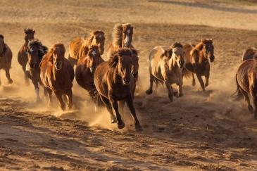 Les chevaux seraient quand même capturés (Crédit : Shutterstock)