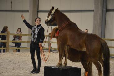 Quentin Vaerman et ses poneys Tip et Bastient. (Crédit : G. Colinet)