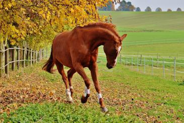 Inspectez régulièrement vos clôtures pour assurer la sécurité de vos chevaux. (Crédit :Pixabay License)