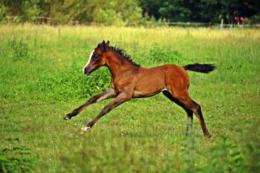 Venez découvrir le cheval sous toutes ses coutures. (Crédit : CC0 Creative Commons)