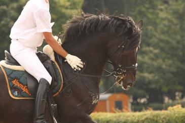 Garder un cheval entier n'est pas toujours facile en compétition. (Crédit : CC0 Creative Commons)