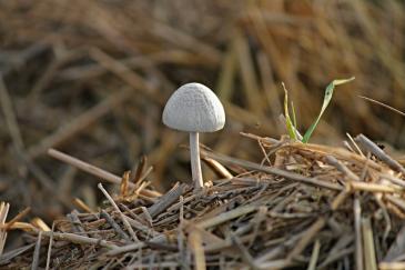 Les champignons jouent un rôle essentiel dans le compostage. (Crédit : CC0 Creative Commons)