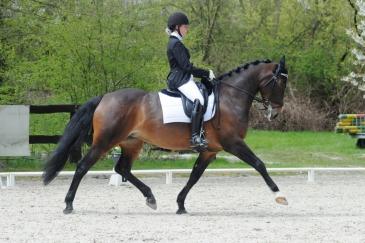 Ophélie Vanderroost et son cheval Tricole Wisbecq (Crédit photo : Photo Evénement)