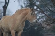 Grâce à leur domestication, les chevaux ont appris à communiquer avec nous. (Crédit : Gaëlle Colinet)