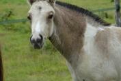 L'hygiène intestinale est au coeur de la santé du cheval (Crédit : Gaëlle Colinet)