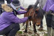 Le poney négligé pris en charge par 4 Balzanes ASBL. (Crédit : 4 Balzanes ASBL)
