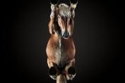 Les chevaux se sont prêtés au jeu avec style. (Crédit : Andrius Burba)
