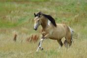 Maintenir un maximum les chevaux au pré ou dans des écuries aérées est un atout. (Crédit : Gaëlle Colinet)