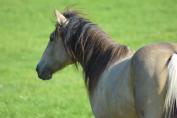 En automne, il faut progressivement adapter l'alimentation des chevaux. (Crédit : G. Colinet)