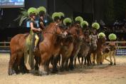 Les Traits de la Famenne, lauréats du Sabot d'Or 2016 lors du Wallonie Equestre Event (Crédit photo : Photo Evénement)