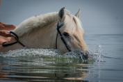 L'hydratation est essentielle pour les chevaux (Crédit : CC0 Creative Commons)
