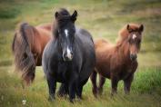 Contre toute attente, les chevaux obèses ne passent pas forcément plus de temps à manger. (Crédit : CC0 Creative Commons)