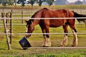 Le cheval devrait manger plus de 12 heures par jour. (Crédit : Pixabay License)