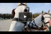 Embedded thumbnail for Les meneurs de la LEWB se préparent avec Felix-Marie Brasseur