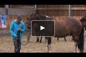 Embedded thumbnail for Apprendre à parler cheval avec Jean-François Pignon