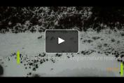 Embedded thumbnail for Les Tarpans dans une réserve naturelle belge