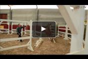 Embedded thumbnail for Concours d'élevage de jeunes chevaux d'endurance
