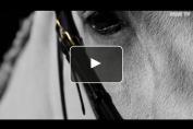 Embedded thumbnail for Les finales du Master du cheval ibérique